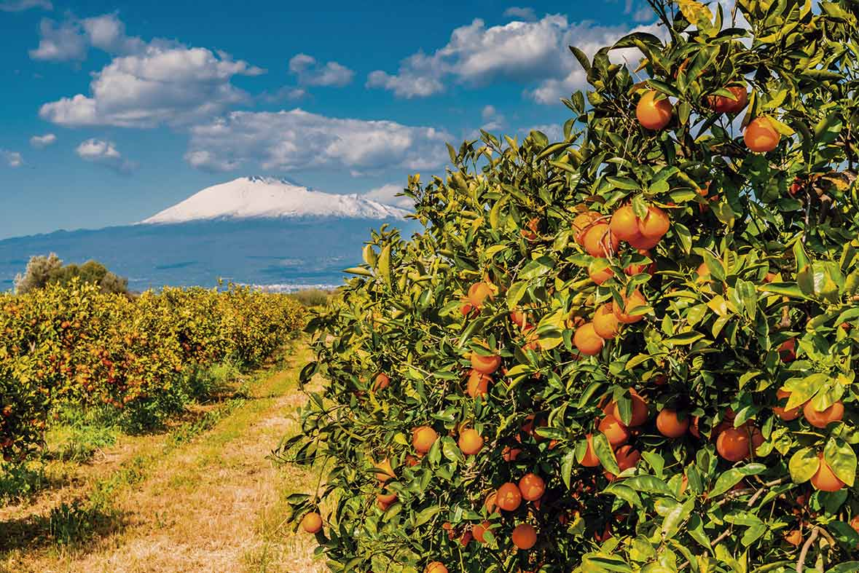 Temporada de naranjas - Campos de azahar