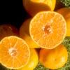 Mandarinas Octubrinas cortada de Valencia - Campos de Azahar