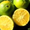 Naranja Navel Chislett - Campos de Azahar