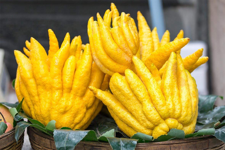 propiedades del limon interna - campos de azahar
