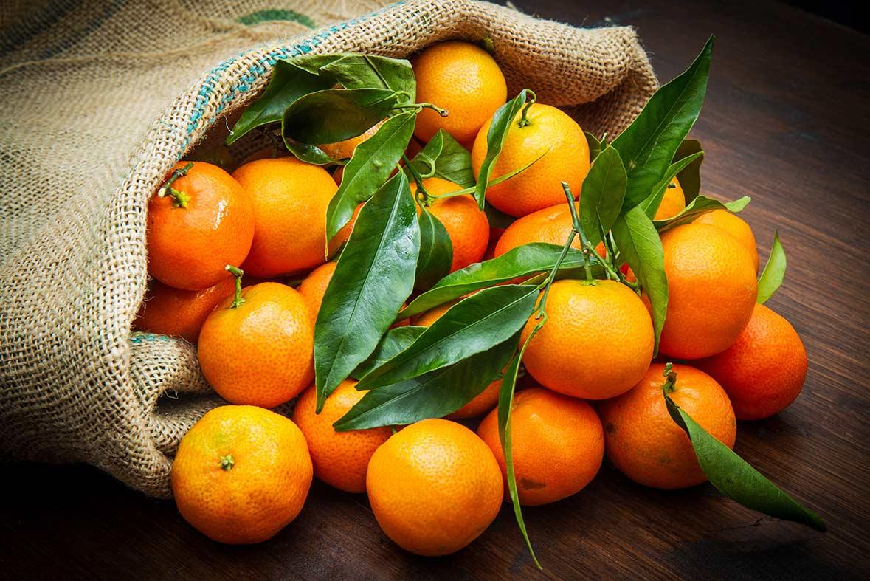 variedades de mandarinas - campos de azahar