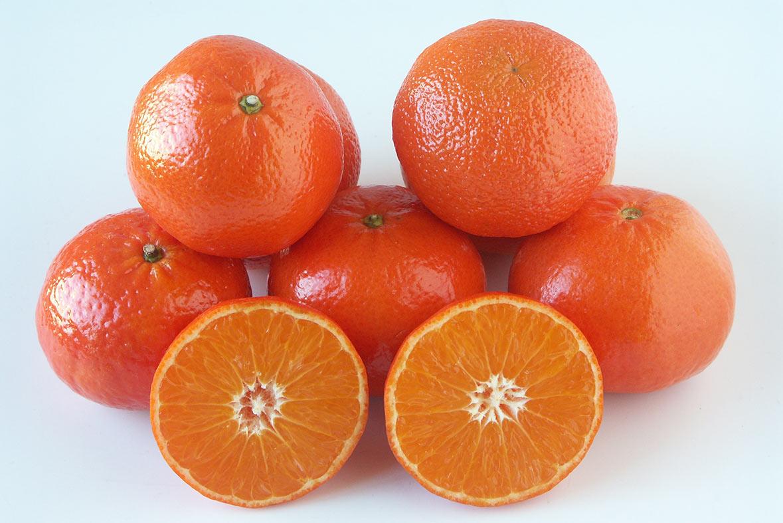 variedades de mandarinas clemenvilla - campos de azahar